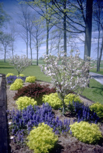 Plant and Lawn Care